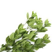 Ветки Лавра зеленые, 65см 3шт