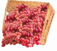 Виноград Тайфи кг, размер 1.00/1.00/1.00